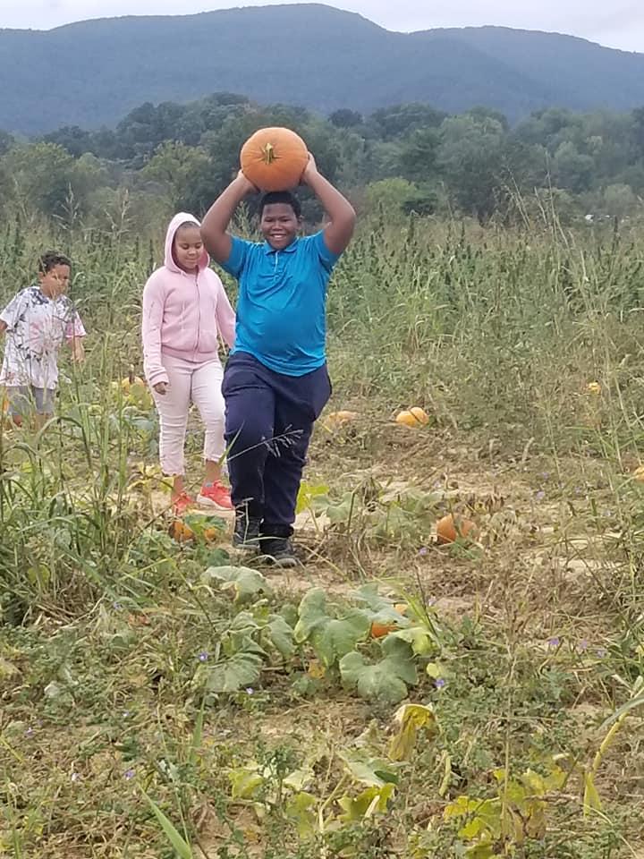 pumpkin 2019 c