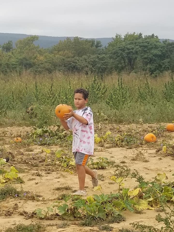 pumpkin 2019 f